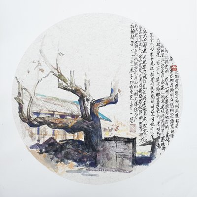 [A1101-0286] 500년-밤나무-황둔리에서
