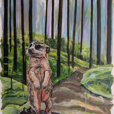 [A1119-0011] Meerkat in Woods
