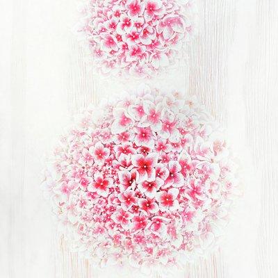 [A1131-0032] White Space  붉은 수국