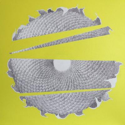 [A1133-0004] sunflower
