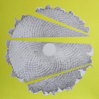 [A1133-0005] sunflower