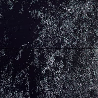 [A1138-0039] 버드나무