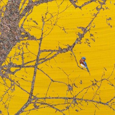 [A1138-0043] 고목나무위 새