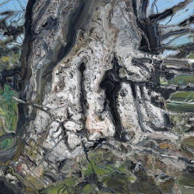 [A1149-0037] 가문비나무