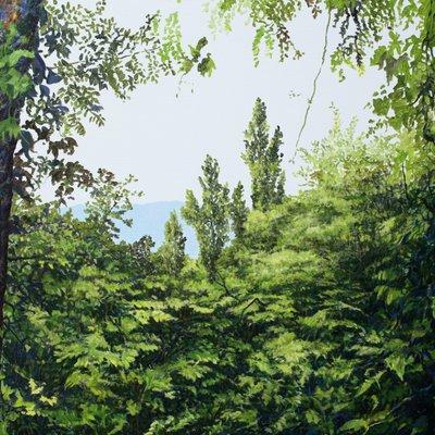 [A1208-0018] Forest - Healing