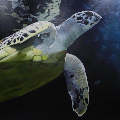 [A1380-0002] Sea turtle-2